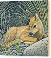 Waiting For Mom-mule Deer Fawn Wood Print