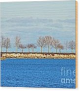 Waiting For Summer - Trees At The Edge Wood Print by Mary Machare