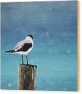 Waiting For The Fishing Boats Wood Print