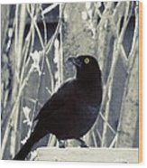 Waiting Grackle Wood Print
