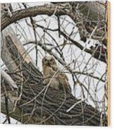 Waiting Owlet Wood Print by Rebecca Adams