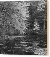 Walden Pond Wood Print by Christian Heeb