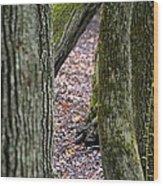 Walk Among The Trees Wood Print