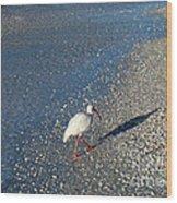 Walk Like An Ibis Wood Print