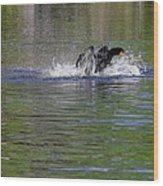 Walk On Water - The Anhinga Wood Print by Christine Till