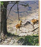 Walking Around The Lake Wood Print