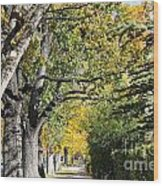 Walking Down Senators Highway Wood Print