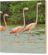 Walking Flamingos Wood Print