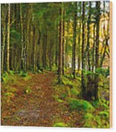 Walking In A Scottish Highland Wood Wood Print by Mark E Tisdale