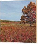 Walking In Big Meadow Wood Print