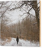 Walking In The Winterly Woodland Wood Print by Matthias Hauser