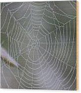 Walking Into Spiderwebs Wood Print