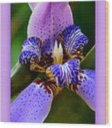 Walking Iris With Purple Border Wood Print