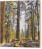 Walking Small In The Tall Forest Wood Print