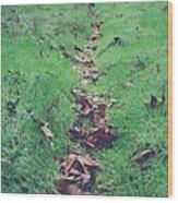 Walking The Path Less Traveled Wood Print