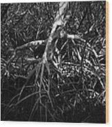 Walking Tree Number 2 Wood Print