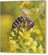 Wall Flower Pollen Wood Print