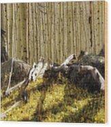 Wall Of Aspens  Wood Print