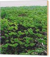 Wall Of Ivy Wood Print