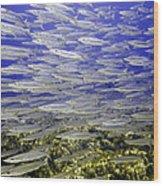 Wall Of Silver Fish Wood Print