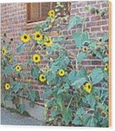 Wall Of Sunflowers 1 Wood Print