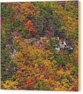 Wall Of Trees Wood Print