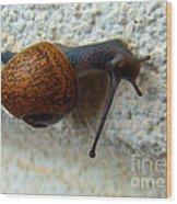 Wall Snail 1 Wood Print