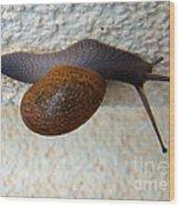 Wall Snail 2 Wood Print