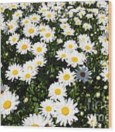 Wall To Wall Daisies Wood Print