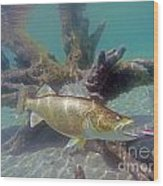 Walleye Pike And Dardevle Wood Print