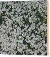 Wallflowers 2  Wood Print