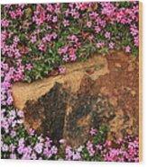 Wallflowers 3 Wood Print