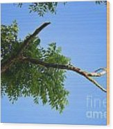 Walnut In The Sky Wood Print