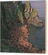 Walrus Haul-out, Alaska Wood Print