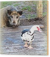 The Pig Want To Be Your Friend, Mr Duck  Wood Print