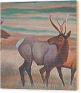 Wapiti  In Sunset Glow Wood Print