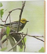 Warbler - Black-throated Green  Wood Print