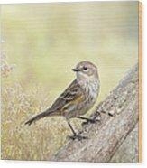 Warbler In Morning Light Wood Print