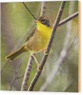 Warbler In Sunlight Wood Print