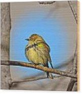 Warbler Wood Print