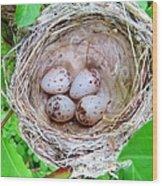 Warbler Nest Wood Print