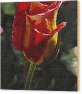 Warm Colored Rosebud  Wood Print