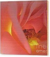 Warm Glow Pink Rose 2 Wood Print