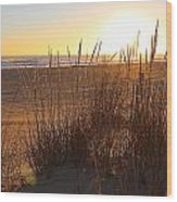 Warm Sea Grass Wood Print