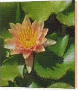 Warm Yellows Oranges And Corals - A Waterlily Impression Wood Print