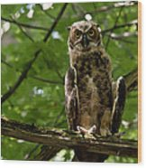 Warm Young Great Horned Owl Wood Print