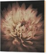 Warmth Of A Dahlia Wood Print
