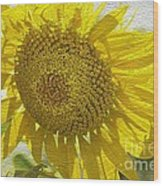 Warmth Upon My Back - Sunflower Wood Print