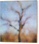 Warner Park Tree Wood Print
