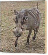 Warthog Approach Wood Print